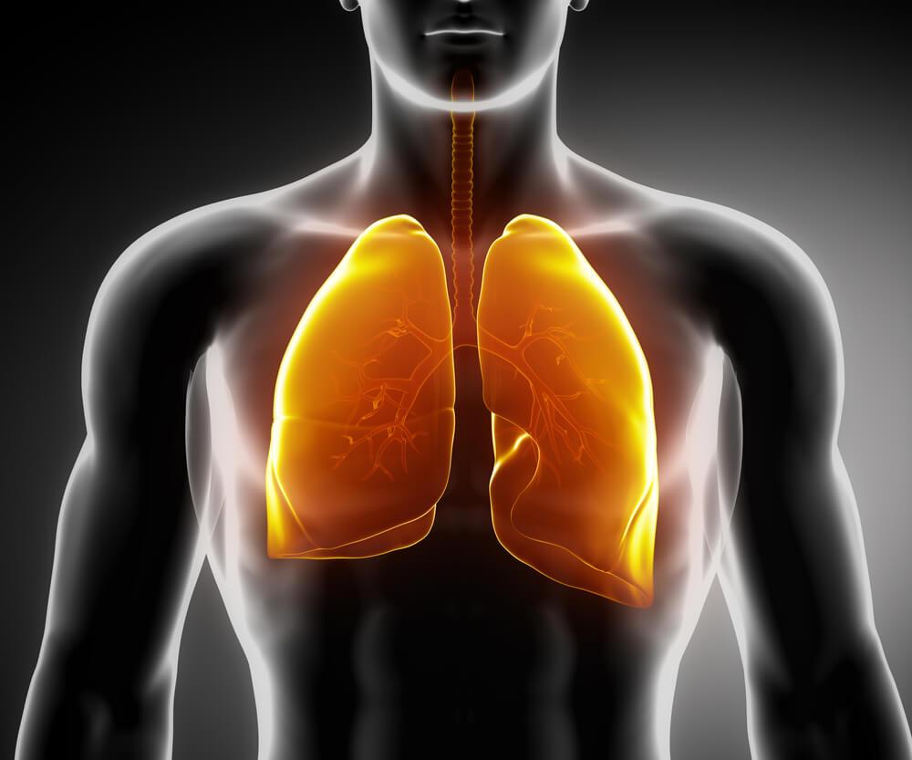 uklad-oddechowy